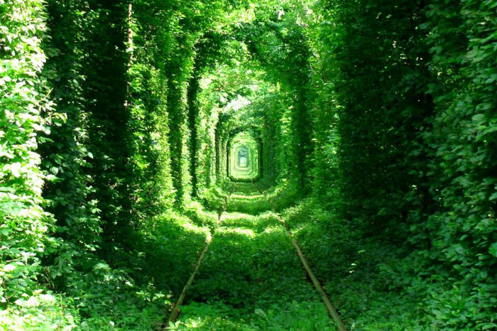 'The Tunnel of Love' – Ukraine